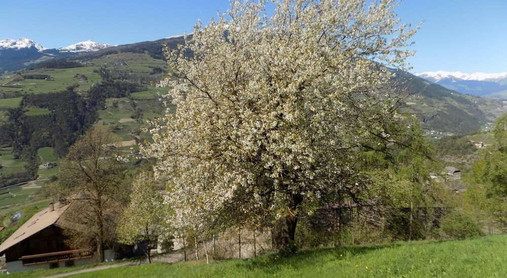 moarhof-gufidaun-klausen-suedtirol (19)