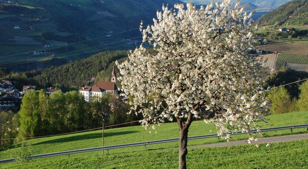 moarhof-gudon-chiusa-alto-adige (7)
